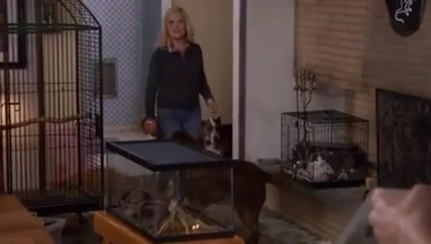 Clip image for 'I adopted 32 cats and dogs.