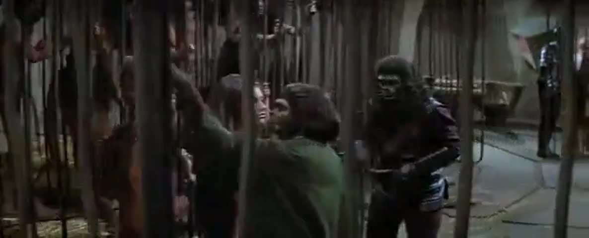 """Quiz for What line is next for """"Beneath the Planet of the Apes """"? screenshot"""