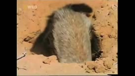 """Quiz for What line is next for """"Honey Badger""""?"""