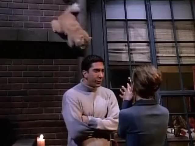 ...like cats, Italian guys.