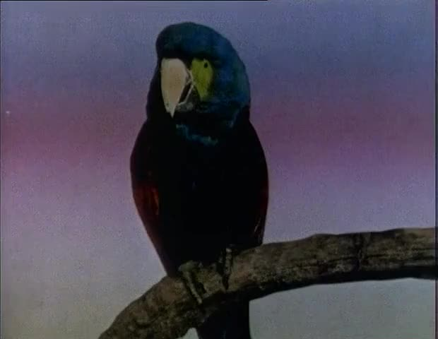 AND PARROTS STARTED TO ANNOUNCE TELEVISION PROGRAMS.