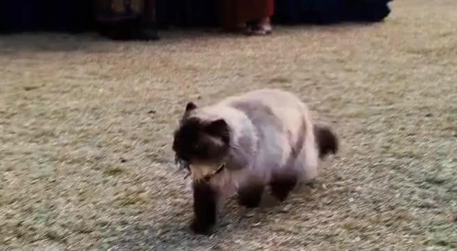 Jinx! Bad cat!