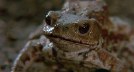 """""""Otis, Otis, Otis, Otis. Come here, Otis,"""" a frog croaked."""