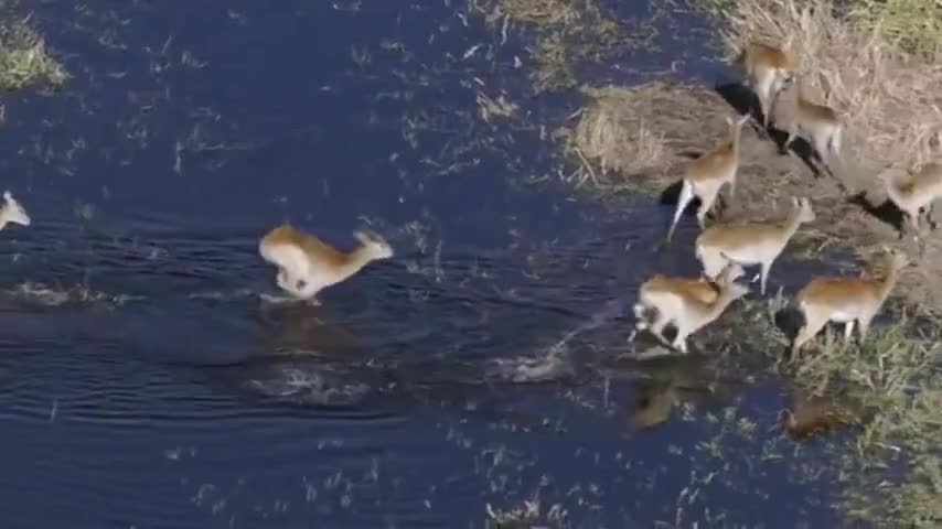 enabling them to move its speed through the water.