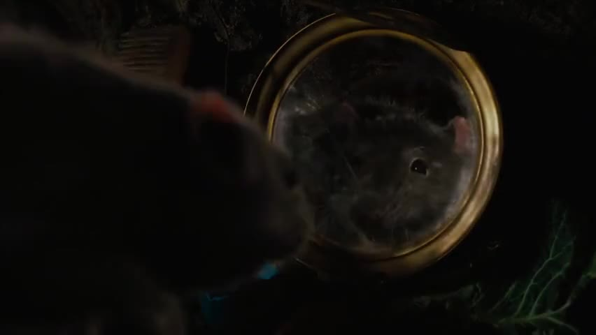 The rat is handsome.