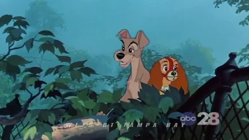 Yarn Hey Look A Beaver Lady And The Tramp 1955 Romance Video Clips By Quotes Clip 7abe75b8 Cc88 4328 9bf8 699aadd36b5f 紗