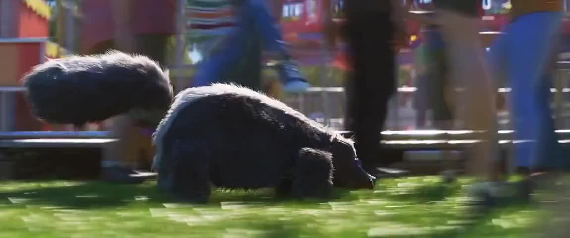 A skunk!