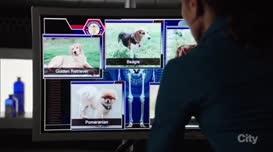 Golden retriever, beagle, Pomeranian...