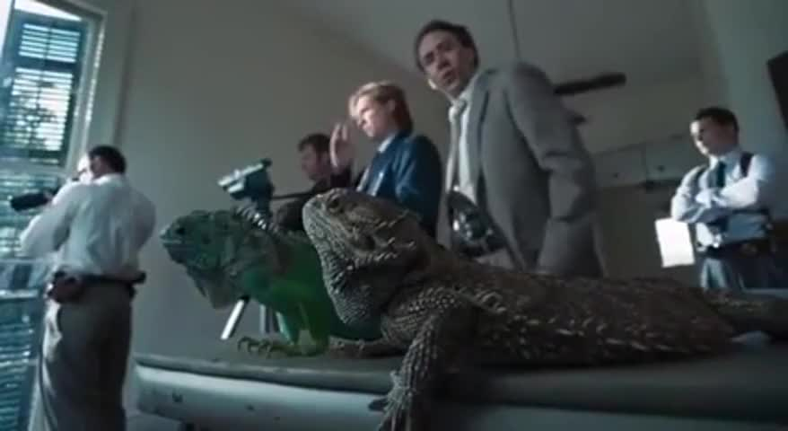 What are these fucking iguanas doing on my coffee table?