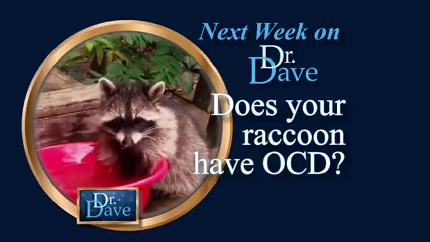 Does your raccoon have OCD? Maybe?!