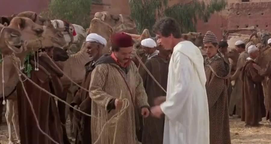 l wanna buy a blind camel.