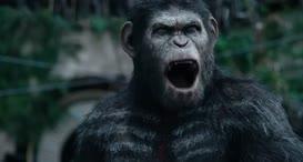 Apes...