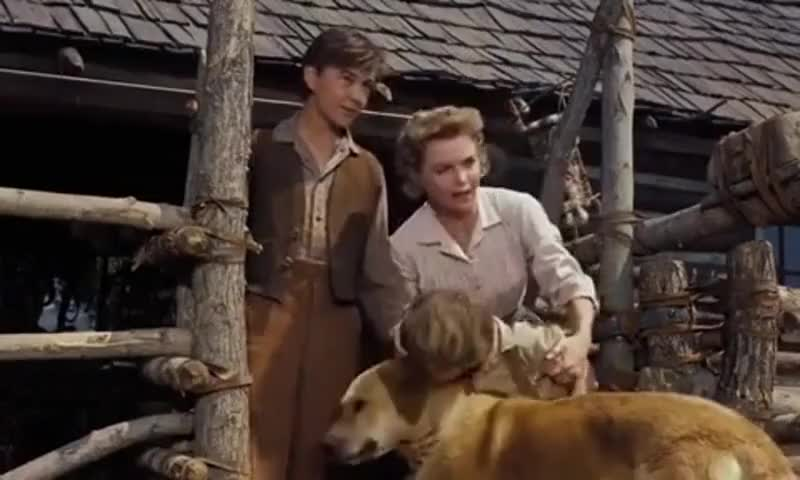 old yeller quotes