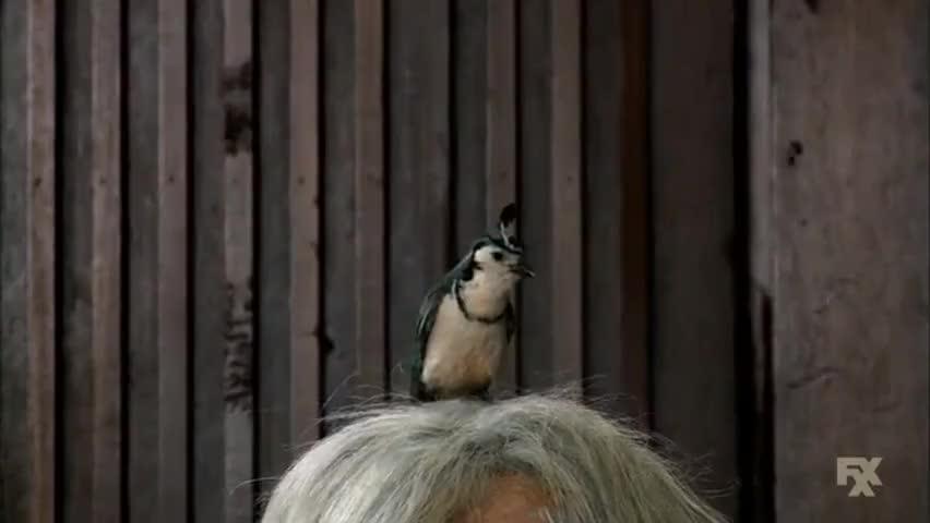 Chickadee, dee, dee, little birdy.
