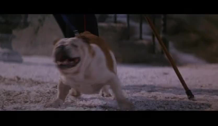 Yarn Come On At Ease Boy 101 Dalmatians 1996 Video Clips By Quotes Clip E49ac6a3 F3a3 4520 Bff3 670b62241b44 Ç´—